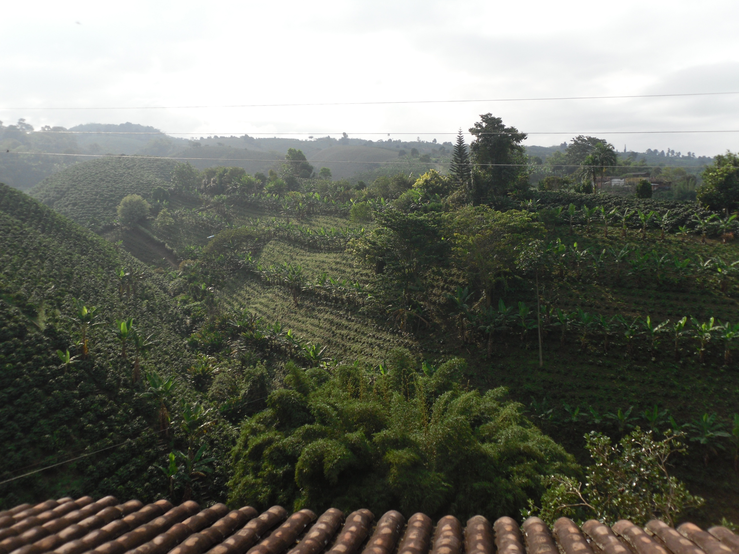 Colombia's famous Coffee Country