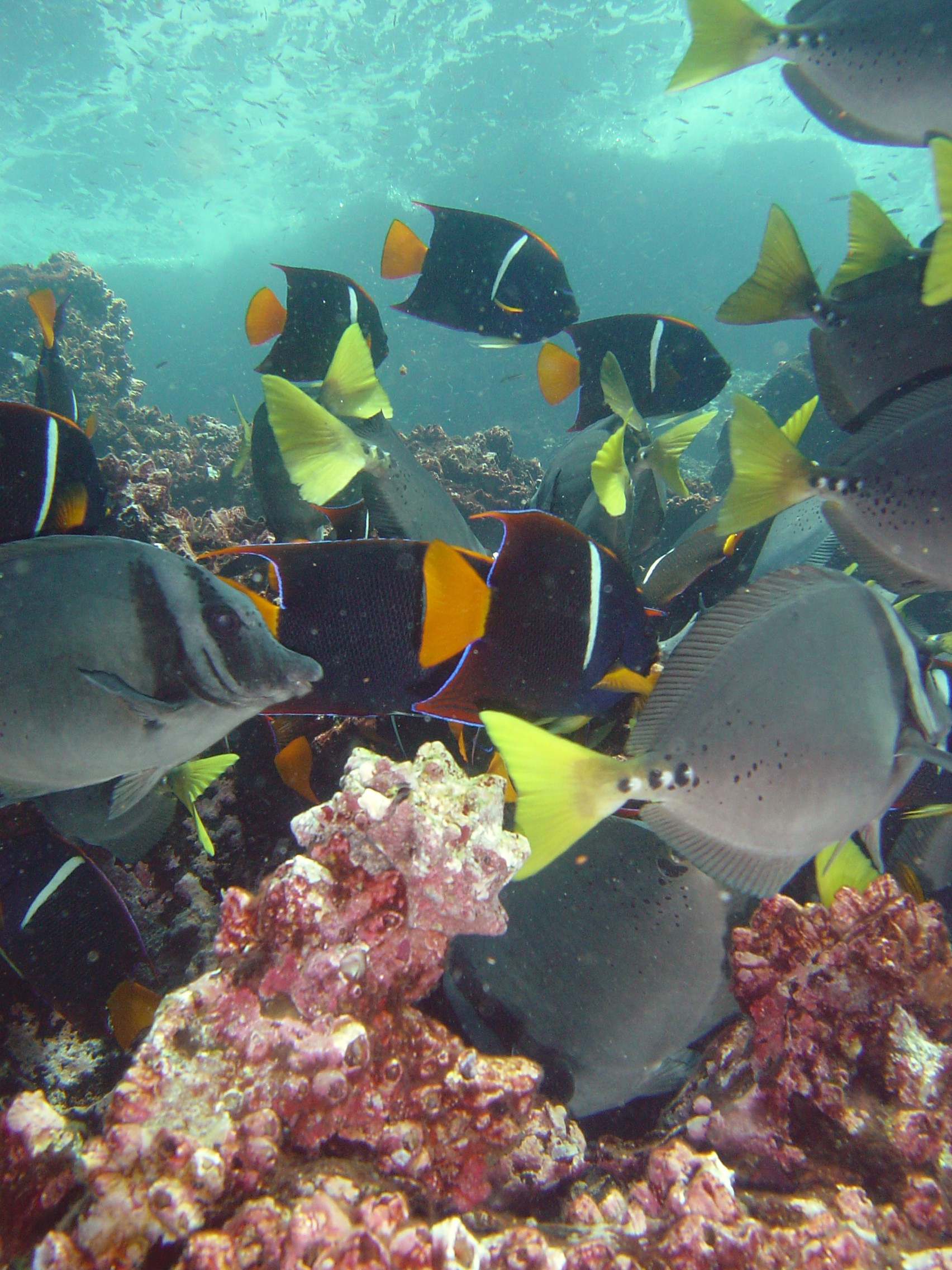 Colorful Underwater Galapagos Islands