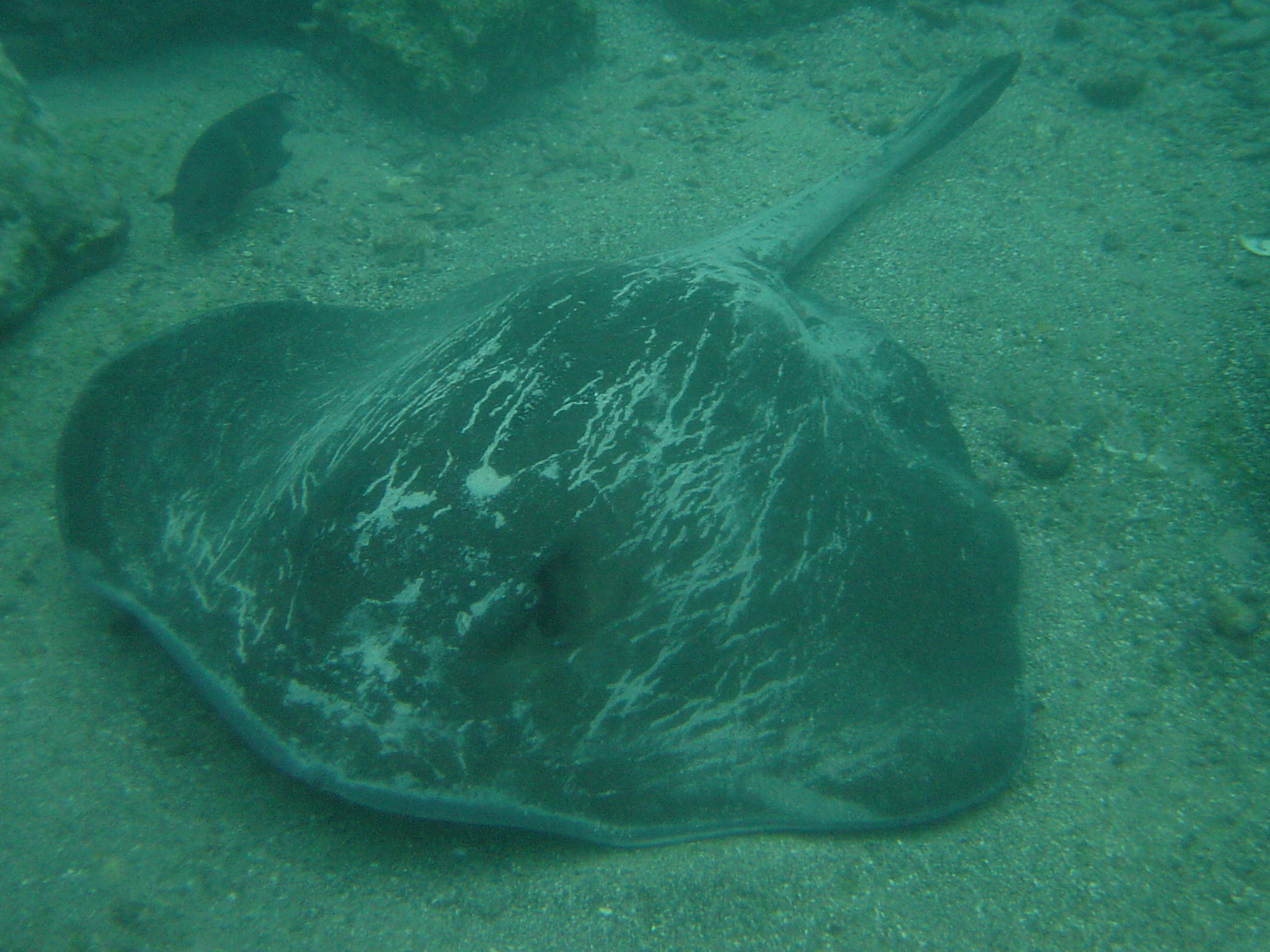 Galapagos Islands underwater discoveries