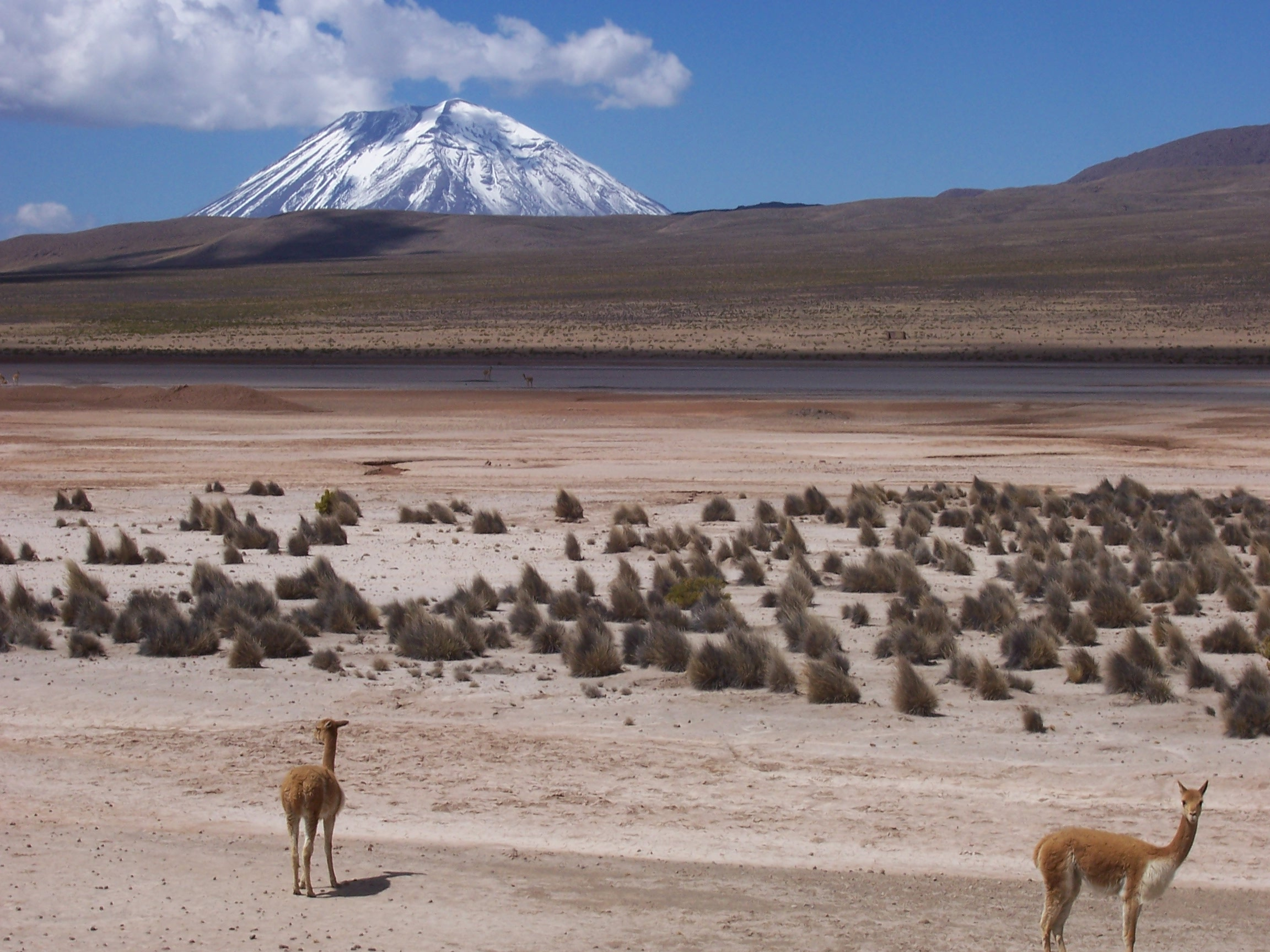 Altiplano of Peru on the road from Arequipa to the Colca Canyon