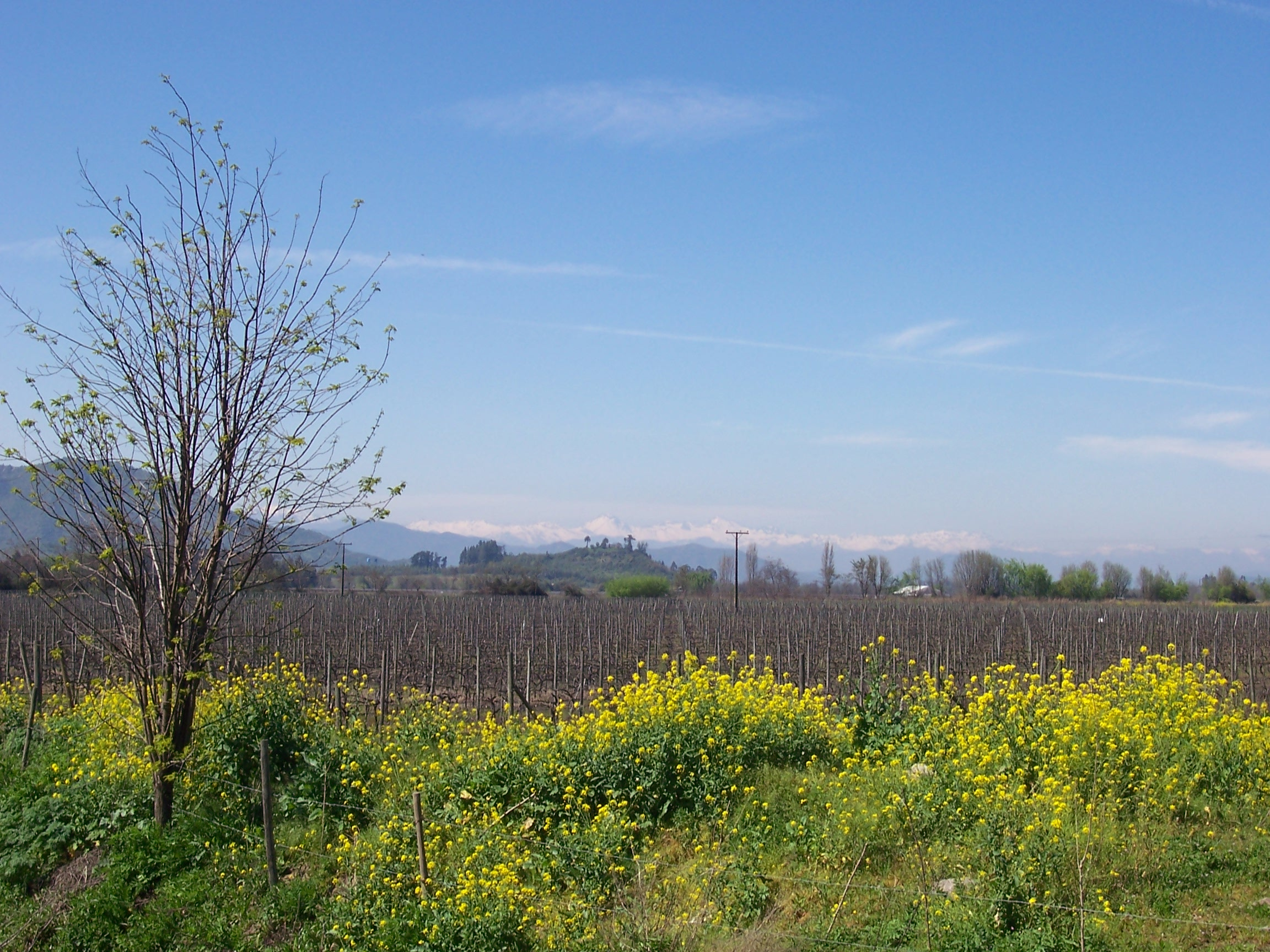 Vineyards of the Colchagua Valley Chile